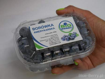Our offer of blueberries