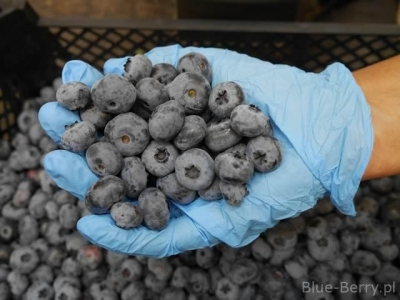 Quality of blueberries